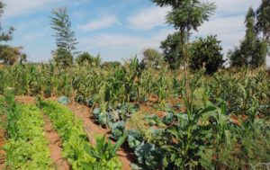 Building resilience and climate change adaptation (Burkina Faso)