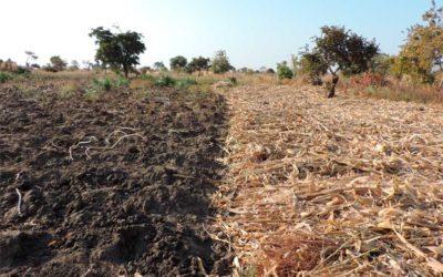 Enhancing water management (Malawi)