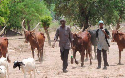 Livelihood recovery (Nigeria)